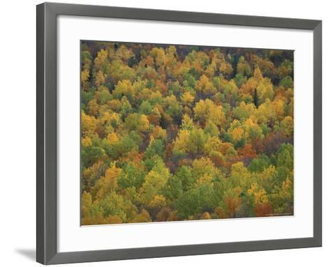 Fall Colors in a Northern Hardwoods Forest, Maine, USA-Jerry & Marcy Monkman-Framed Art Print