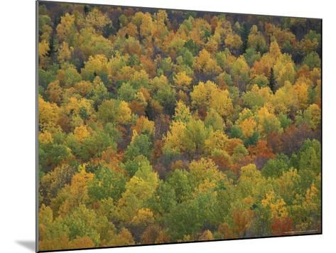 Fall Colors in a Northern Hardwoods Forest, Maine, USA-Jerry & Marcy Monkman-Mounted Photographic Print