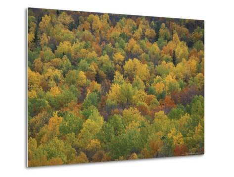 Fall Colors in a Northern Hardwoods Forest, Maine, USA-Jerry & Marcy Monkman-Metal Print