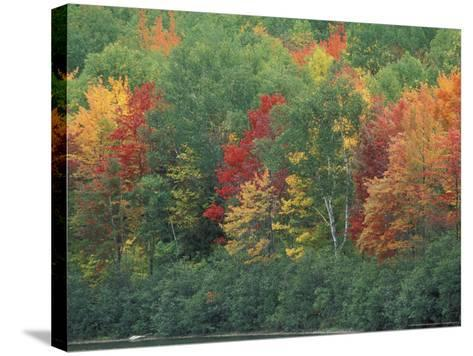 Fall Colors of the Northern Forest, Maine, USA-Jerry & Marcy Monkman-Stretched Canvas Print