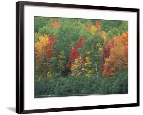 Fall Colors of the Northern Forest, Maine, USA-Jerry & Marcy Monkman-Framed Art Print