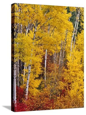 Autumn Color in the Flathead Valley, Montana, USA-Chuck Haney-Stretched Canvas Print