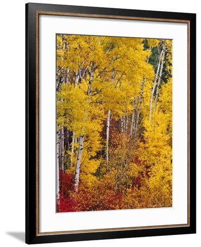Autumn Color in the Flathead Valley, Montana, USA-Chuck Haney-Framed Art Print