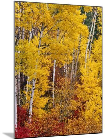 Autumn Color in the Flathead Valley, Montana, USA-Chuck Haney-Mounted Photographic Print