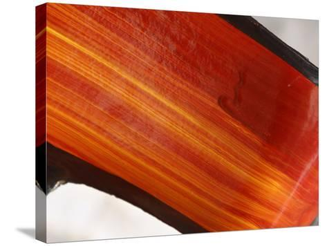Close-up of Bright Orange Streaks of Paint--Stretched Canvas Print