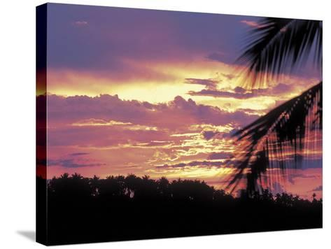 Gold and Pink Sunset with Silhouette of Palm Tree--Stretched Canvas Print