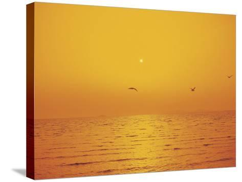 Golden Sunset with Seagulls Over an Ocean--Stretched Canvas Print