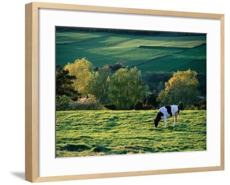 Cow in Field in Sinarpsdalen Valley, Above Bastad, Sweden-Anders Blomqvist-Framed Art Print