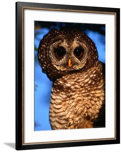 Wood Owl, South Africa-Carol Polich-Framed Art Print