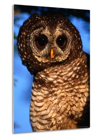 Wood Owl, South Africa-Carol Polich-Metal Print