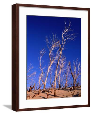 Dead Trees in Sand Dunes at Sunrise, Croajingolong National Park, Victoria, Australia-Grant Dixon-Framed Art Print