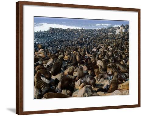 Seals in Cape Cross Seal Reserve, Skeleton Coast National Park, Namibia-David Wall-Framed Art Print
