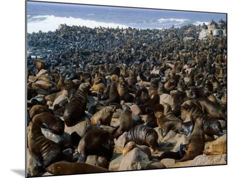 Seals in Cape Cross Seal Reserve, Skeleton Coast National Park, Namibia-David Wall-Mounted Photographic Print