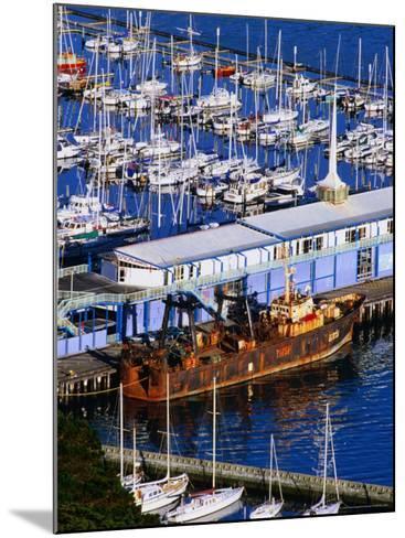Chaeffers Marina at Oriental Bay, Wellington, Wellington, New Zealand-Paul Kennedy-Mounted Photographic Print