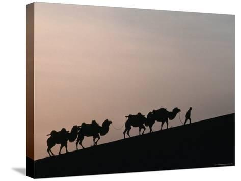 Camel Caravan Silhouetted at Dawn on the Silk Road, Dunhuang, China-Keren Su-Stretched Canvas Print
