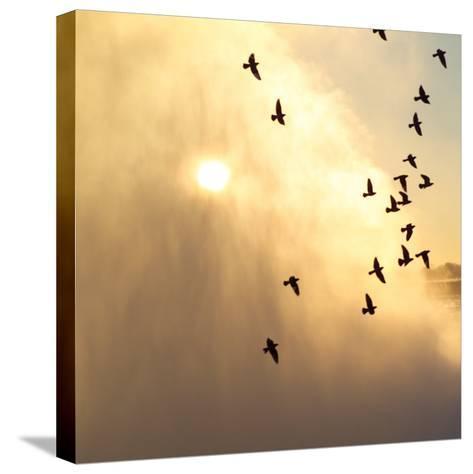 Birds Flying Above Niagara Falls, Ontario, Canada-Keith Levit-Stretched Canvas Print