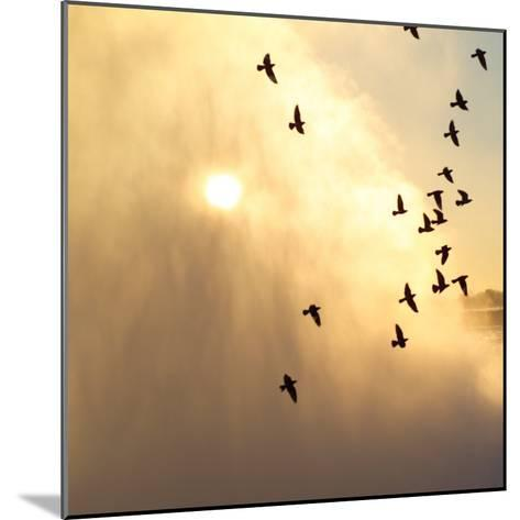 Birds Flying Above Niagara Falls, Ontario, Canada-Keith Levit-Mounted Photographic Print
