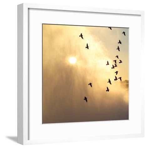 Birds Flying Above Niagara Falls, Ontario, Canada-Keith Levit-Framed Art Print