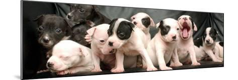 Puppy Love--Mounted Photographic Print