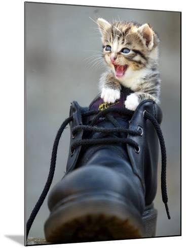 A Kitten in a Boot--Mounted Photographic Print