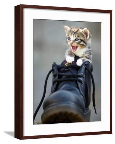 A Kitten in a Boot--Framed Art Print