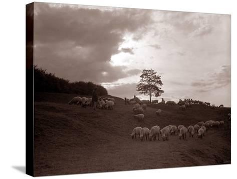 A Shepherd Surveys His Flock at the End of the Day, 1935--Stretched Canvas Print
