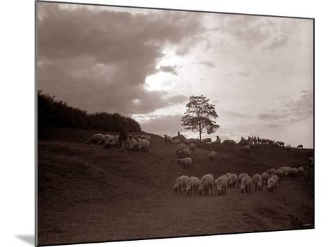 A Shepherd Surveys His Flock at the End of the Day, 1935--Mounted Photographic Print