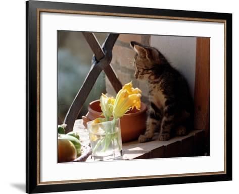 A Kitten Watching Through a Window, August 1997--Framed Art Print
