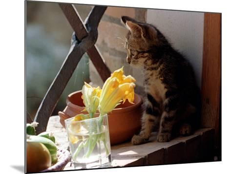 A Kitten Watching Through a Window, August 1997--Mounted Photographic Print