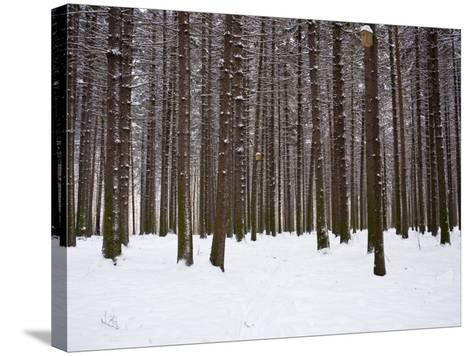 Winter Forest in Snow, Moscow, Russia-Ivan Vdovin-Stretched Canvas Print