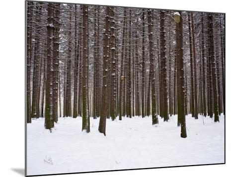 Winter Forest in Snow, Moscow, Russia-Ivan Vdovin-Mounted Photographic Print