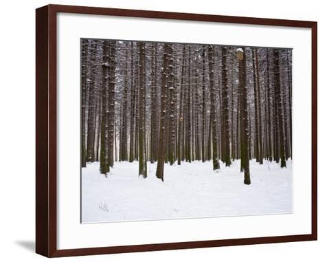 Winter Forest in Snow, Moscow, Russia-Ivan Vdovin-Framed Art Print