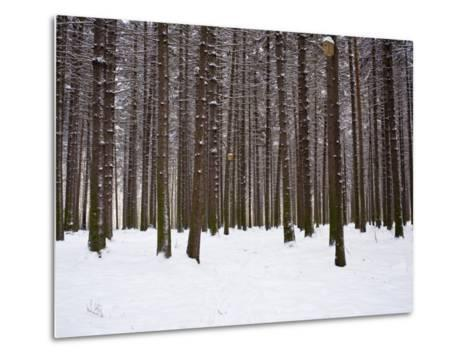 Winter Forest in Snow, Moscow, Russia-Ivan Vdovin-Metal Print