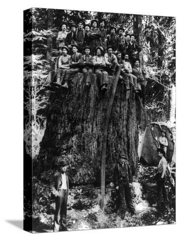 Lumberjacks prepairing Fir Tree for St. Louis World's Fair Photograph - Washington State-Lantern Press-Stretched Canvas Print