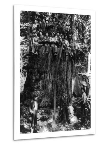 Lumberjacks prepairing Fir Tree for St. Louis World's Fair Photograph - Washington State-Lantern Press-Metal Print