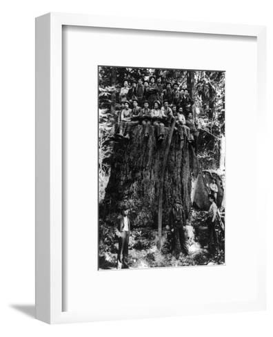 Lumberjacks prepairing Fir Tree for St. Louis World's Fair Photograph - Washington State-Lantern Press-Framed Art Print