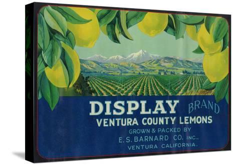 Display Lemon Label - Ventura, CA-Lantern Press-Stretched Canvas Print