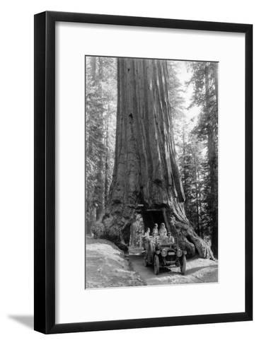 View of a Loaded Model-T Ford under Wawona Tree - Redwood National Park, CA-Lantern Press-Framed Art Print