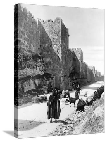 Sheep Taken to Market in Jerusalem Photograph - Jerusalem, Palestine-Lantern Press-Stretched Canvas Print