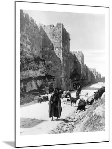 Sheep Taken to Market in Jerusalem Photograph - Jerusalem, Palestine-Lantern Press-Mounted Art Print
