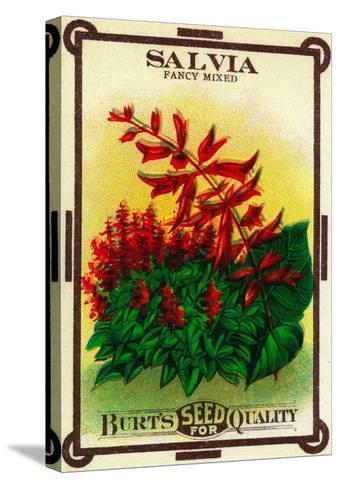 Salvia Seed Packet-Lantern Press-Stretched Canvas Print