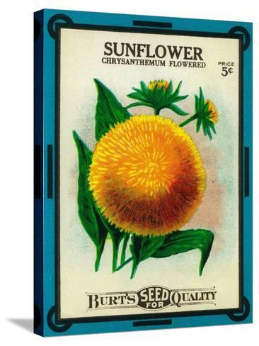 Sunflower Seed Packet-Lantern Press-Stretched Canvas Print
