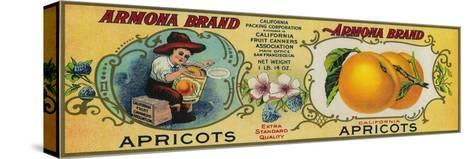 Armona Apricot Label - San Francisco, CA-Lantern Press-Stretched Canvas Print