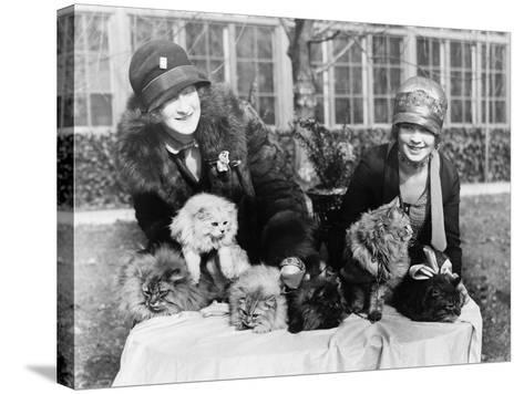 Women with their Persian Cats at Cat Show Photograph - Washington, DC-Lantern Press-Stretched Canvas Print
