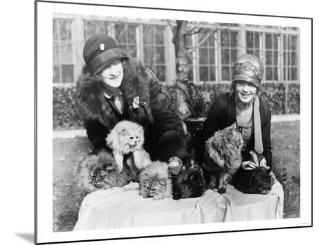 Women with their Persian Cats at Cat Show Photograph - Washington, DC-Lantern Press-Mounted Art Print
