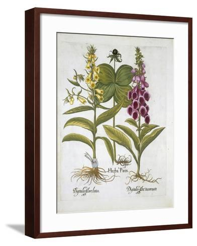 Herb Paris--Framed Art Print
