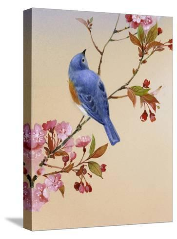 Blue Bird on Cherry Blossom Branch--Stretched Canvas Print