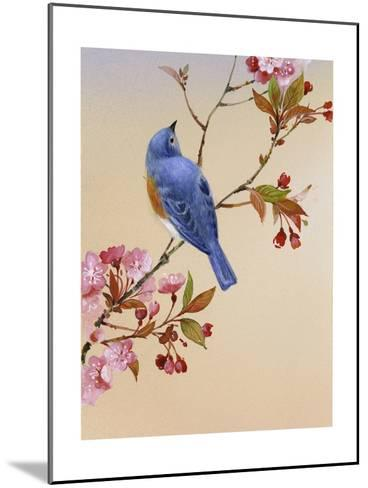 Blue Bird on Cherry Blossom Branch--Mounted Photo