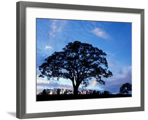 Oak Trees at Sunset on Twin Oaks Farm, Connecticut, USA-Jerry & Marcy Monkman-Framed Art Print
