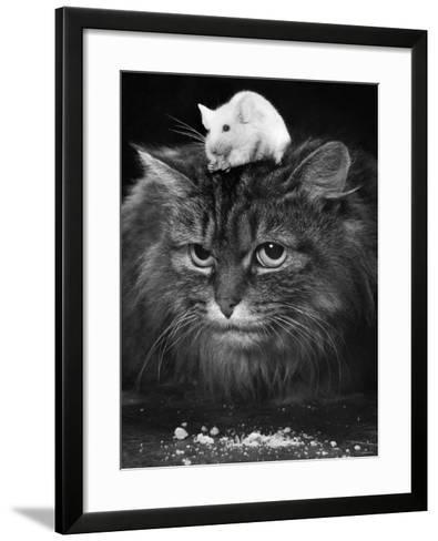 Animal Friendships: Cats and Mice--Framed Art Print